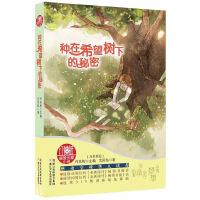 红蜻蜓暖爱长篇小说:种在希望树下的秘密